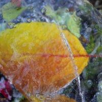 Листик во льду :: Любовь Шихова