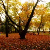 Осенний парк :: Екатерина Тумовская
