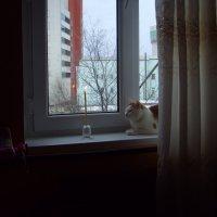 Родной очаг :: Максим Глебов