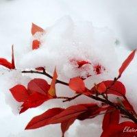 Первый снег :: Екатерина Березина