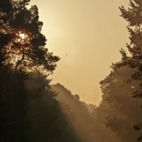 Туманный восход :: Alla Honig