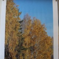 Аллея средняя осень :: Наталья Золотых-Сибирская
