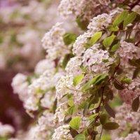 Цветы :: Александр Данильчев