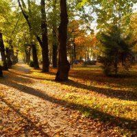Осень в парке :: Екатерина Тумовская