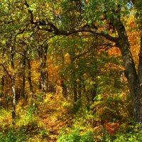 Осенние краски :: Николай Курганов