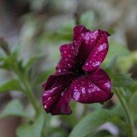 Цветок :: Петр Зелинский