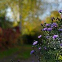 осенние цветы :: сергей ершов