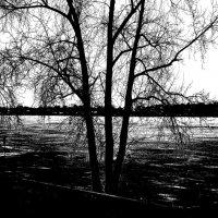 Черно-белая весна :: Владимир Архипов