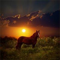 Ты гуляй, гуляй мой конь.. :: Виктор Перякин
