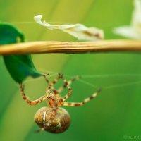 Немного из жизни паука.... :: Alexandr Safronov