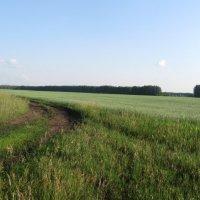 дорога в поле :: Лена Юмблюд