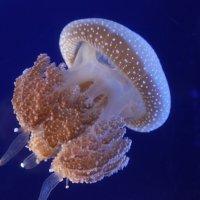 медуза :: Алекс Беc
