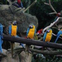 птицы :: Алекс Беc