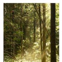 Утро в лесу :: Наталья Мунцева