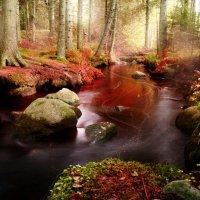 Эльфийский лес :: Екатерина Тумовская