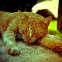 Тёплые коты :: Екатерина Николайчук