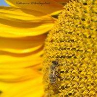 Неправильные пчёлы) :: Екатерина Николайчук