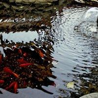 Рыбки и фонтанчик :: Ирина Рассветная