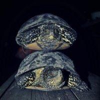 прокати меня большая черепаха! :: Екатерина Николайчук