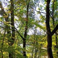 Озеро в лесу :: Елена Васильева