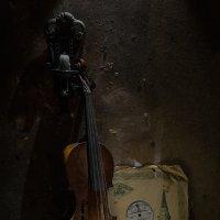 Скрипка :: Evgeny Kornienko