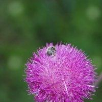 Цветок :: Артём Невгод