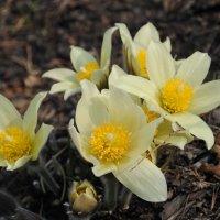 Весна :: Татьяна Слободенюк