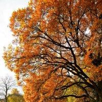 Золотая осень :: Алексей Кудрявцев