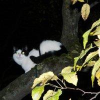 Ночная прогулка :: Lina Liber