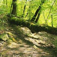 В лесу :: Ирина Рассветная