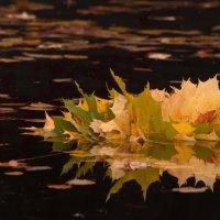 Осенний букет :: Елизавета Вавилова