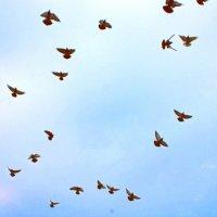 Птицы :: Дарья Малышева