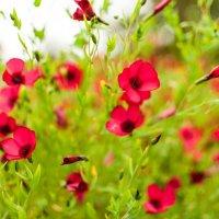 Цветы :: Анастасия Розова