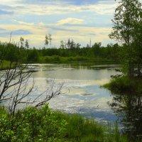 озеро в лесу :: Вячеслав Завражнов