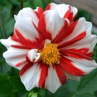 Цветок :: Tatyana Semerik