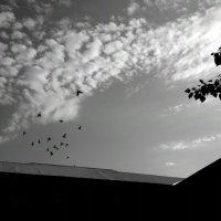 хочу летать, как могут птицы... :: Альбина Еликова