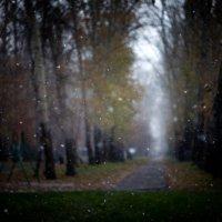 Первый снег* :: Nadia Sergeeva