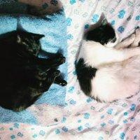 кошки как печки :: Malina Shock