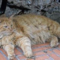 Французский кот в парке Грэйс Келли :: Светлана Игнатьева