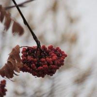 Из серии:Осень :: Софья Закроева