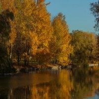 Золотая осень... :: Александр Манько