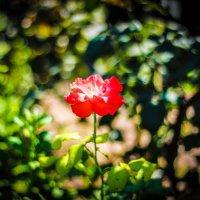 Цветок среди зелени :: Игорь Прокофьев