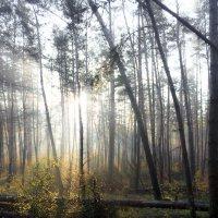 С добрым утром, солнышко! :) :: Владимир Скибин