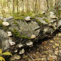 в лесу... :: Ann Chusa