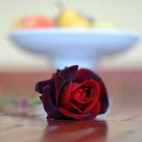 роза.. :: Марина Брюховецкая