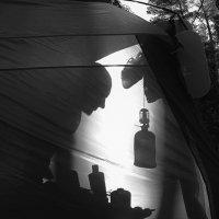 Утром в лесу. :: Николай Гонтарь