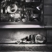 Сон под музыку :: Александр Зизенков