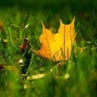 Осень :: Александр Бондарь