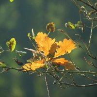 Желтый лист осенний вьется в небесах :: Людмила