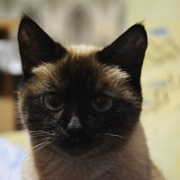 Кошка :: Александр Огарь